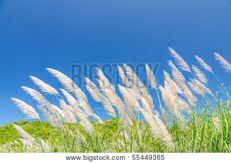 Wind Blowing Through Flower Grass
