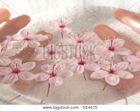 Home Spa - A Litte Pink Flowers