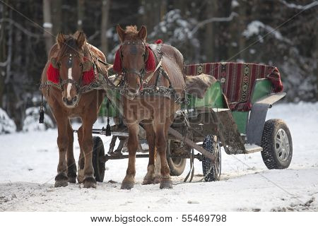 Traditional Ukrainian Christmas horse cart.