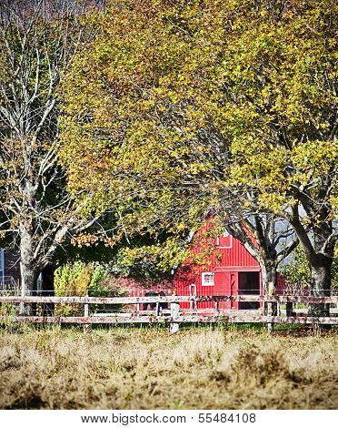 Red Barn With Horse On Farm