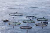 Aquaculture fish farms in northern Peloponessos, Greece poster