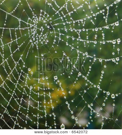 a spider web with some water droplets early in the morning poster