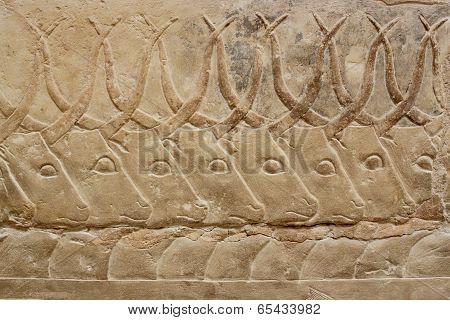 Ancient Egyptian Engravings Depicting Bulls On A Mastab Wall