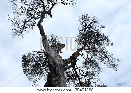Strong unique tree like a man. The Leningrad Region, Russia. poster