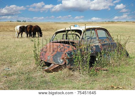 Wreck car in a field, overgrown with weeds and forgotten in background horses grazing poster