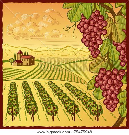 Vineyard landscape. Vector