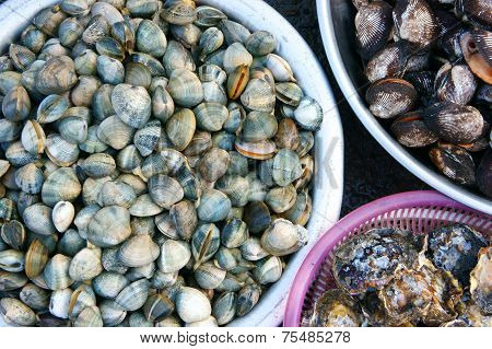 poster of Fresh seafood show at Vietnam open air market sellfish (nail) is nutrition food rich omega 3 healthy eating commonly at coastal Asian raw for many dish