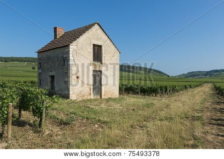 Vineyard House In Beaune