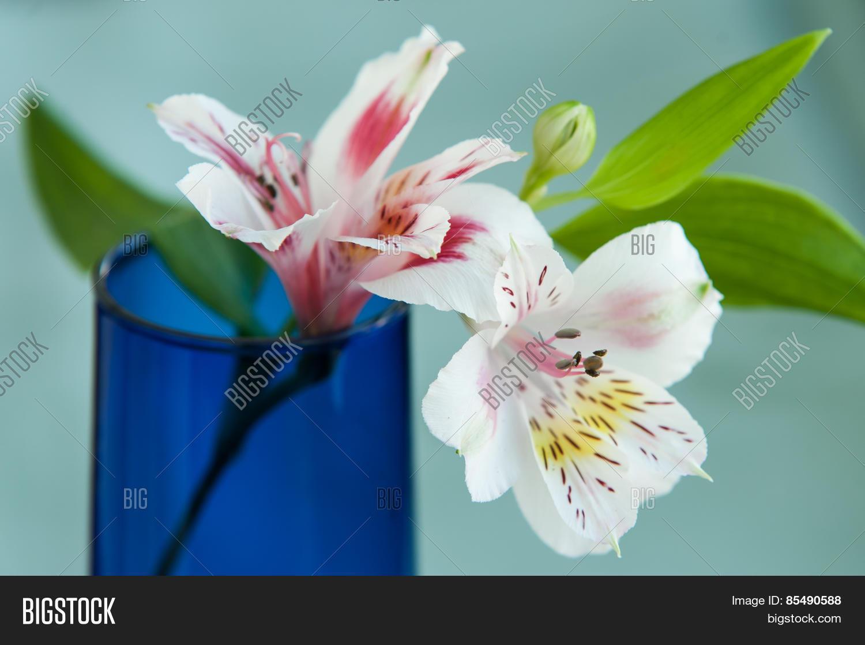 Alstroemeria flowers image photo free trial bigstock alstroemeria flowers in blue vase izmirmasajfo