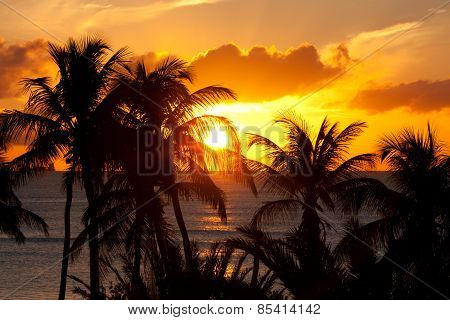 Orange Sunset With Palm Trees