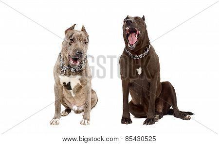 Yawning dogs