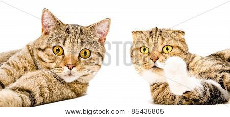 Portrait of two cats close-up