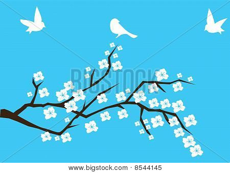 Vector cherry blossom with birds on blue background poster