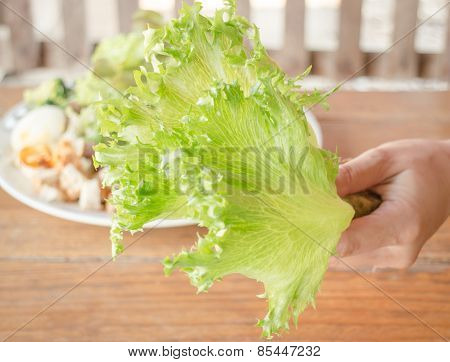 Hand Hold Fresh Hydroponic Frillice Iceberg