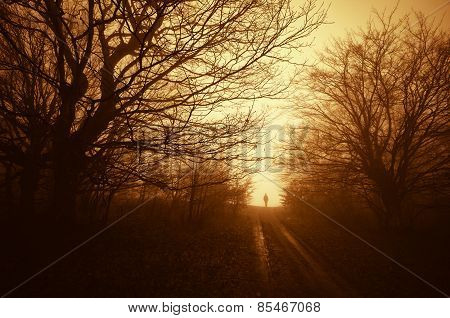 Man on path in forest at sunset