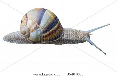 Close-up Of A Snail