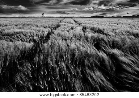 Biker and The Windy Field