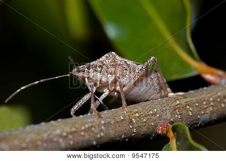 a view from under a stink bug sitting on a small branch with green leaves blurred in the back ground poster