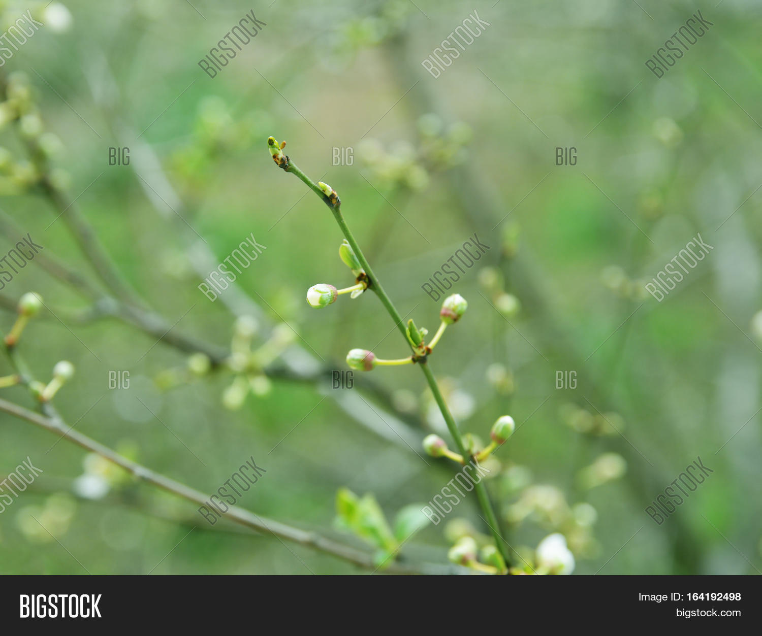 Colors Spring Flower Image Photo Free Trial Bigstock
