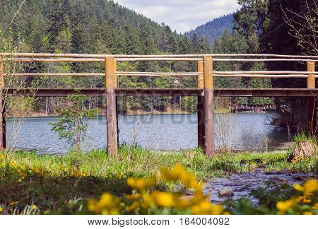 wooden bridge fenced by a wooden fence through mountain lake Synevyr in a pine forest