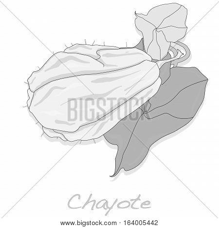 Chayote image isolated on white background .