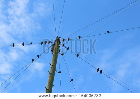 Flock of birds perched on telegraph wires against a blue sky