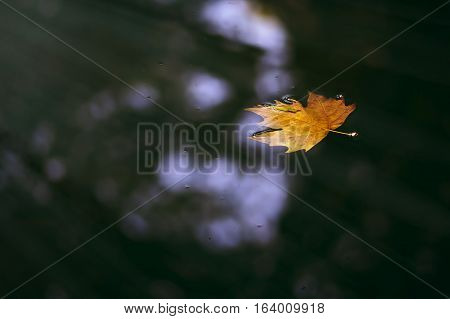 Nature. Solitary floating fallen leaf on calm water.
