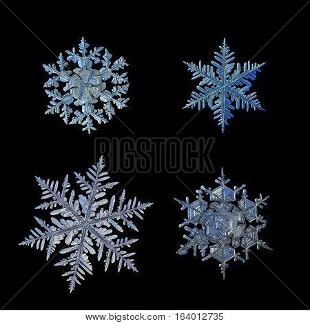 Set with four snowflakes, isolated on black background. This is macro photo of real snow crystals: big stellar dendrites and fernlike dendrites with complex structure.