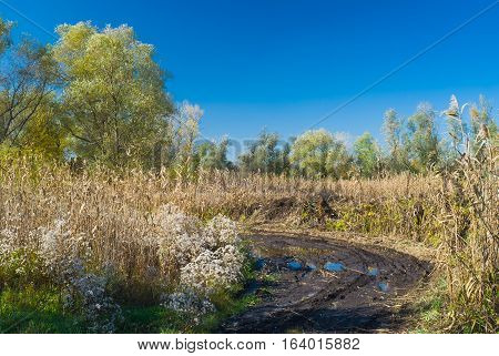 Ukrainian rural landscape - quiet boggy place at autumnal season.