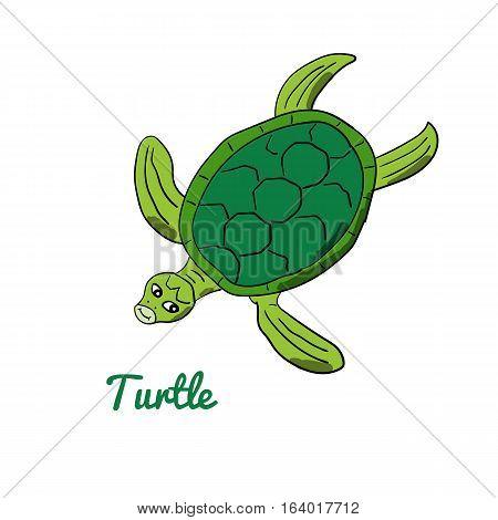 Cute cartoon turtle. Ocean animal vector illustration. Sea creature in a funny, hand drawn style.
