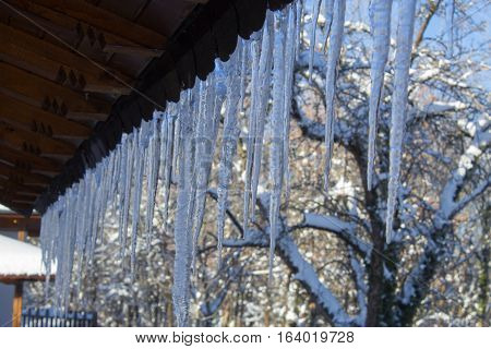 Snowy Ice Icicles Hanging On A Roof House