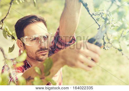 Gardener cuts dry branches of treesselective focus