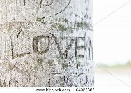 Etched love on tree the word