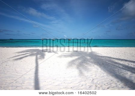 Beautiful tropical beach with two coco palm's shadows on white sand