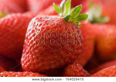 Fresh Strawberry
