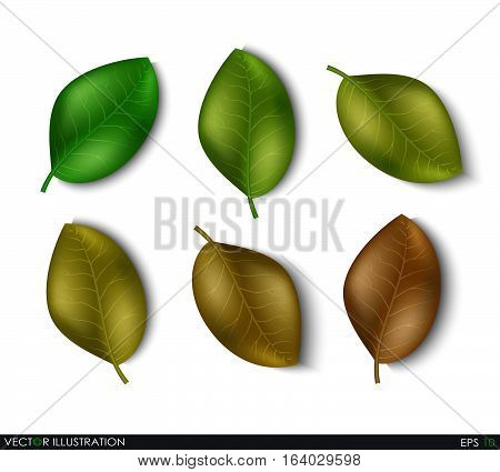 Set of leaves different shades design elements. Green sprout green leaves symbol vector icon set. Ecological theme. Greenery. Eco. Vector Illustration.