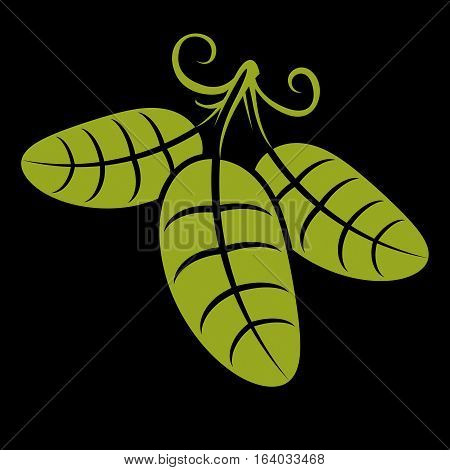 Three spring or summer leaves simple vector icon nature and gardening theme illustration. Stylized tree green leaf with tendrils botany and vegetarian design element.