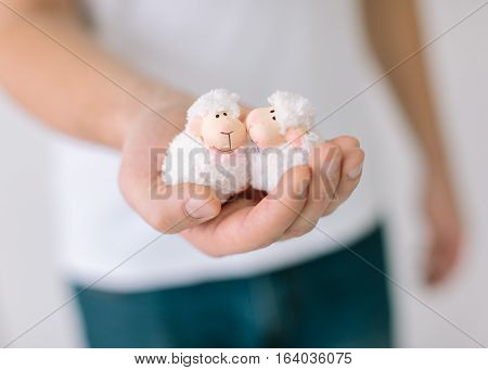 the man holds in hand of two toy lambs in love. two toy lambs close up.