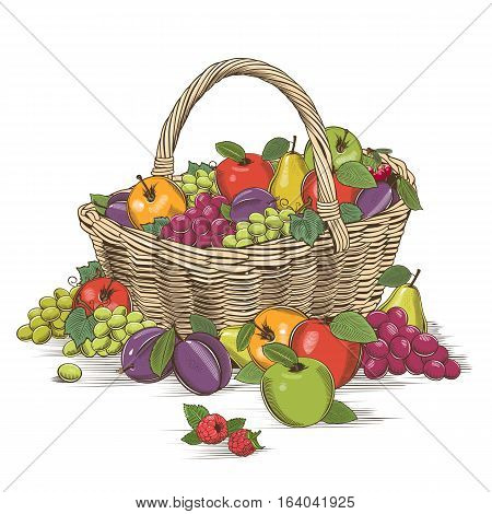 Fruit basket on white background in woodcut style.