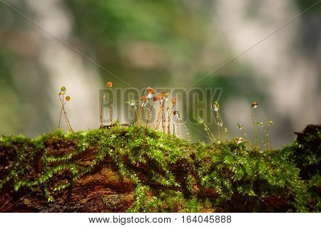 Drops of water on moss with bright nature background