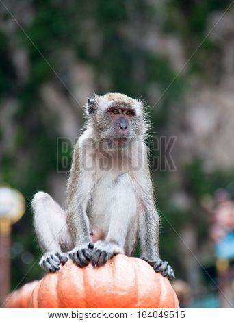 A monkey perches on the staircase at Batu Caves in Malaysia.