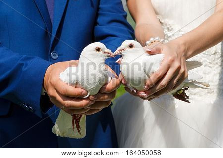 two white pigeons in the hands of the bride and groom