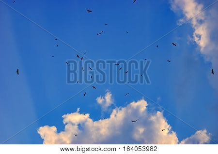 Birds flying in the blue sky. Clouds filled the sky. A lot of birds.