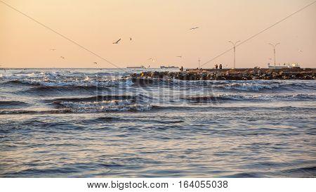 Storm, Gulls On The Coast Of The Black Sea, The River Rioni, Poti, Georgia