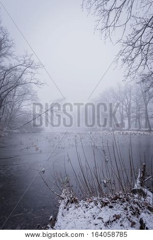 Frozen Pond With Few Trees In Cold Foggy Snowy Morning