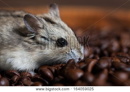 Cute Little Mouse Sitting Alongside A Coffee Beans