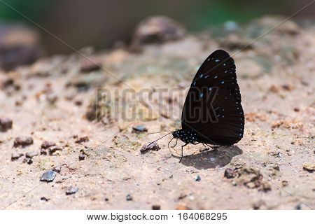Beautiful Butterfly in the nature ( Summer )