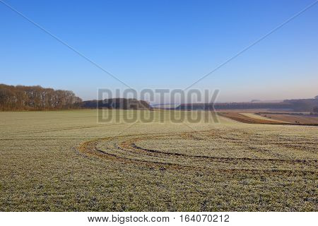Frosty Wheat With Tyre Tracks