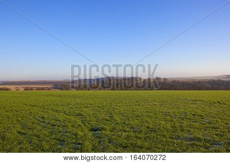 Green Wheat And Scenery