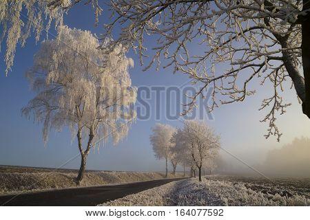 Frozen trees with rime field sunlight winter road